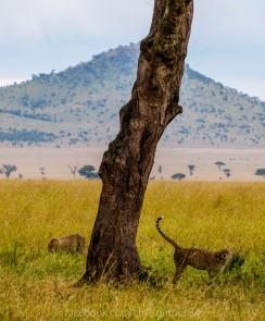 2012-06-24-safari-2