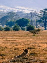2012-06-24-safari