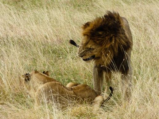 First Lions, ROARR!