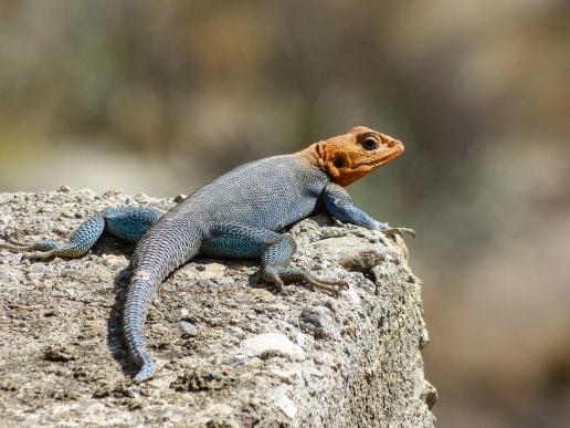 Cool Lizard.