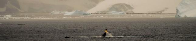 #96_antarctica_cuvervilleharbour